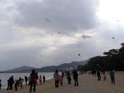 津田の凧揚げ大会5