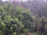 津田町で雪が降っている写真1