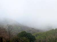 津田町、霧で真っ白の写真①
