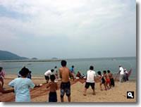 津田町地引き網の写真2010年7月30日①