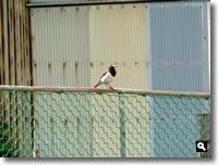 mitzの家でよく見かける野鳥の写真