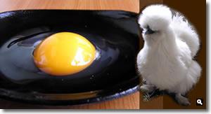 松本ファーム 烏骨鶏と烏骨鶏の卵の写真