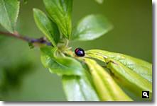 てんとう虫の写真