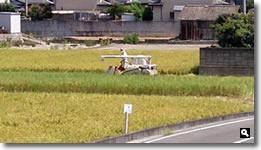 津田町の稲刈りの写真