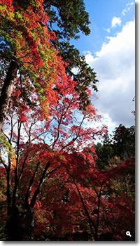 2015年11月11日 大窪寺の紅葉の写真①