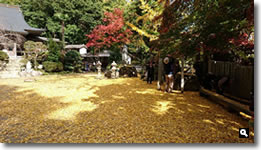 2015年11月11日 大窪寺の紅葉の写真②