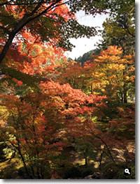 2016年11月12日 11/11に撮影した大窪寺の紅葉の写真②