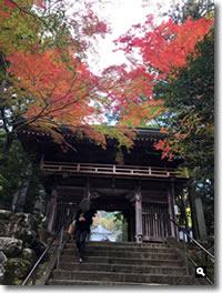 2016年11月12日 11/11に撮影した大窪寺の紅葉の写真①