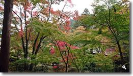 2018年10月31日 大窪寺の紅葉の写真