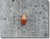 2020年7月18日 さぬき市津田町鶴羽 mitz自宅の蝉の抜け殻の写真