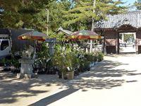 2019年5月11日(土)津田石清水神社春市の苗木販売の写真